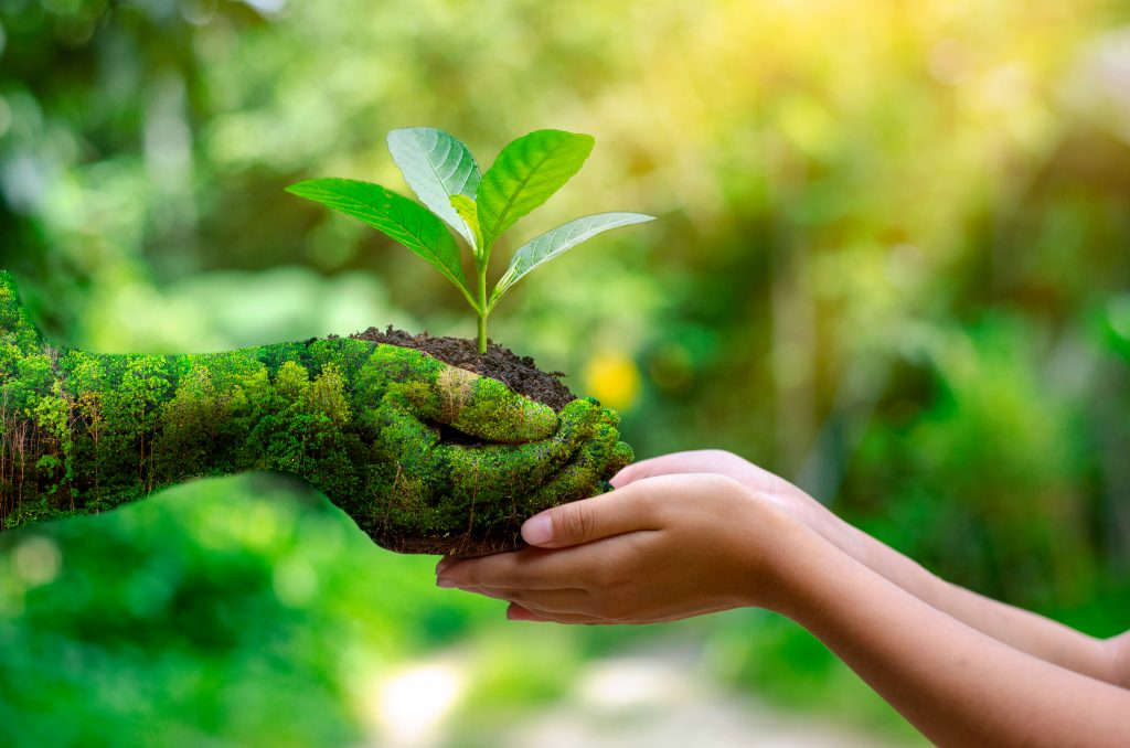 conceptul eco friendly sense cosmetics